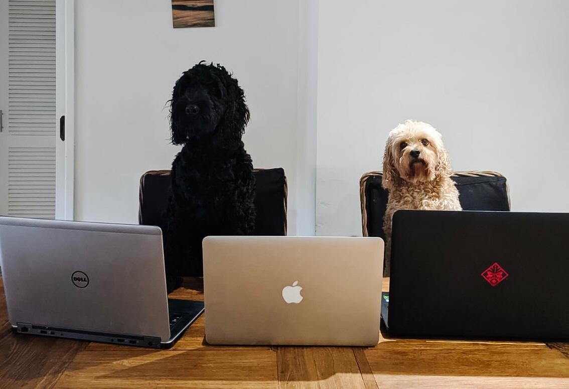 Ernest & Co Recruitment - Working from home